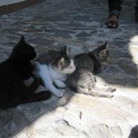 アルバイシンは猫ちゃんも多い