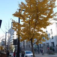 グラナダの秋、そして紅葉