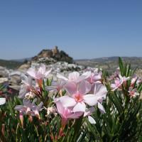 春先は爽やかな花の香りで溢れる